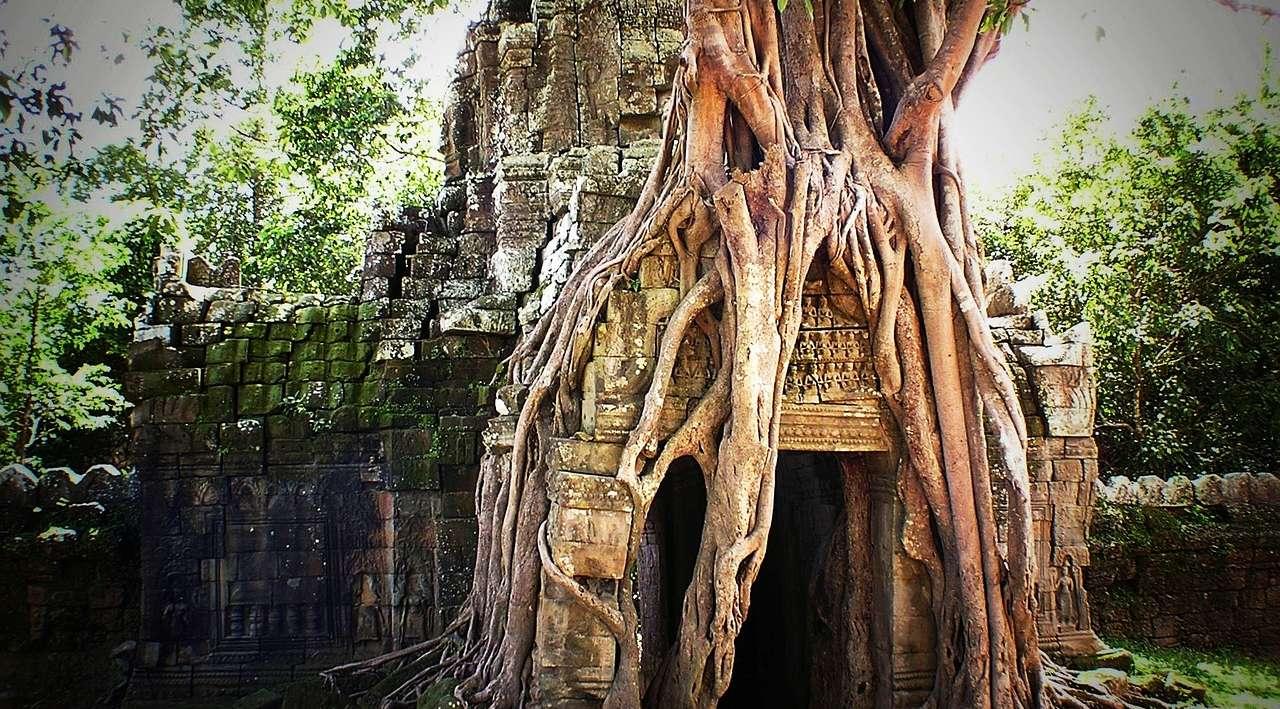 Natura ad Angkor Wat cambogia