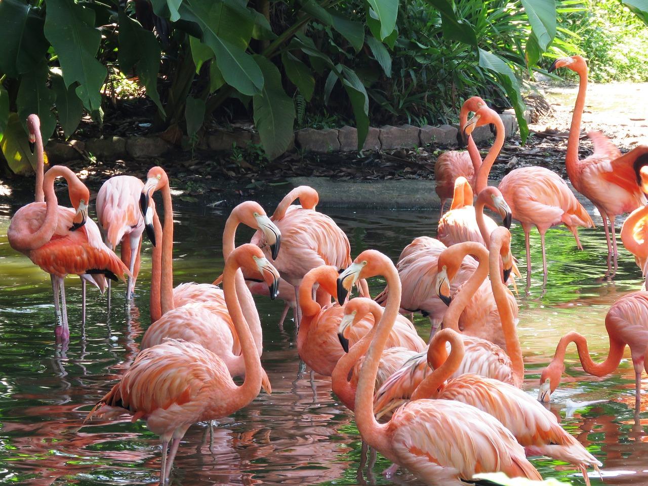 jurong parco degli uccelli singapore