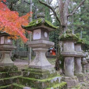 giardini di Yoshikien e di Isuien