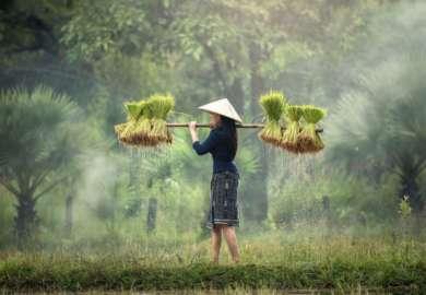 Viaggi su Misura 11 Vietnam e Cambogia 15 giorni12 notti Le Perle indocinesi 2